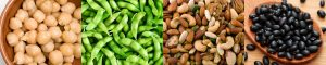 Vegan Studies Network Nuts beans and pulse banner